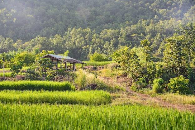 Estilo de vida tradicional en el área rural lejos de la capital en tailandia