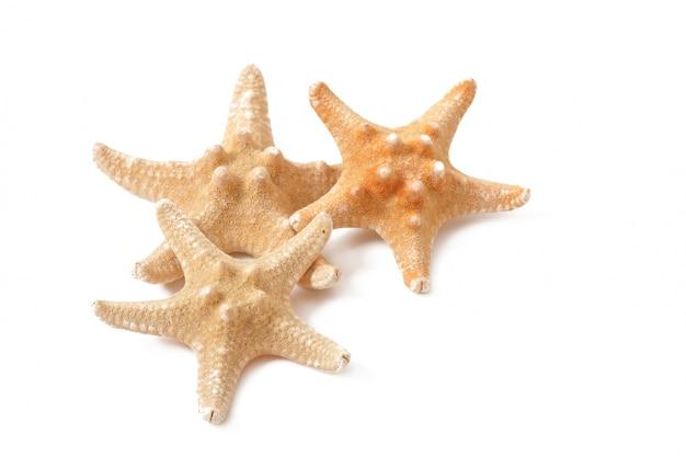 Estrella de mar aislada