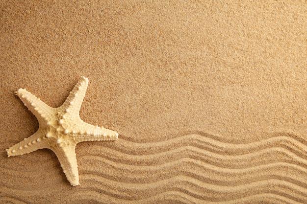 Estrella de mar en la arena, verano. vista superior