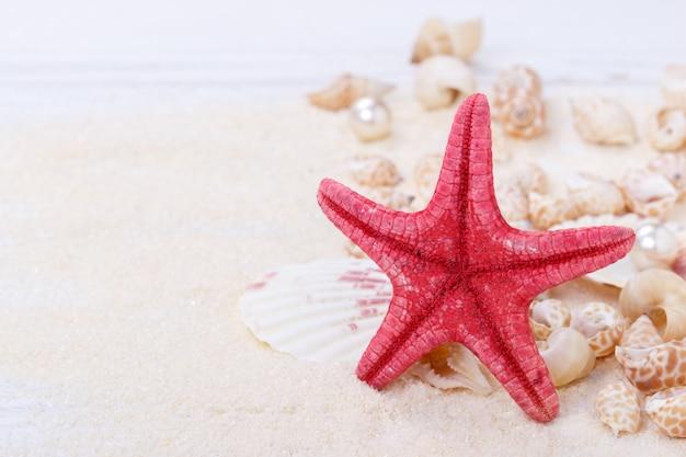 Estrella de mar y conchas marinas.