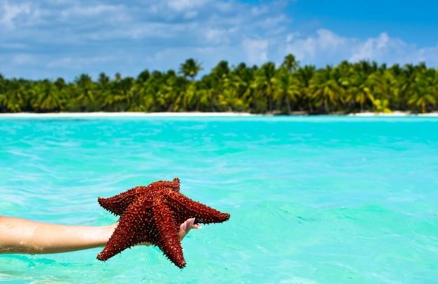 Estrella de mar en mano en el mar