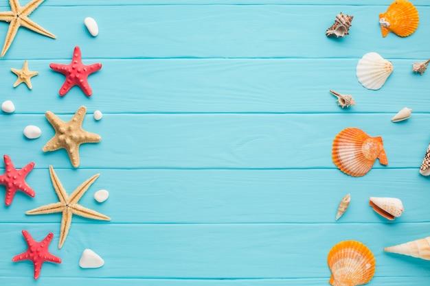 Con la estrella de mar plana y conchas marinas.
