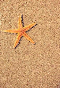 Estrella de mar en la playa en la arena