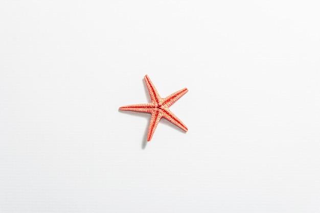 Estrella de mar roja única aislada en blanco.