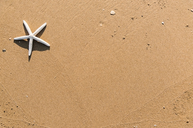 Estrella de mar seca en el fondo de la playa