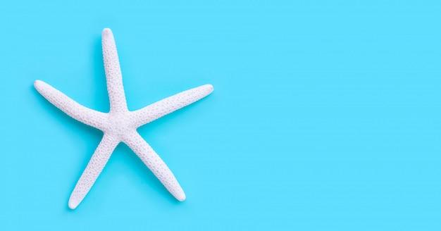 Estrella de mar sobre fondo azul.