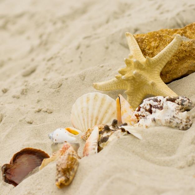 Estrellas de mar y conchas en el fondo de arena