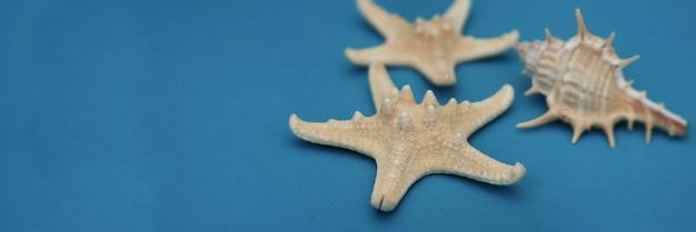 Estrellas de mar y conchas marinas, decoración náutica marítima sobre fondo azul con el espacio de la copia.