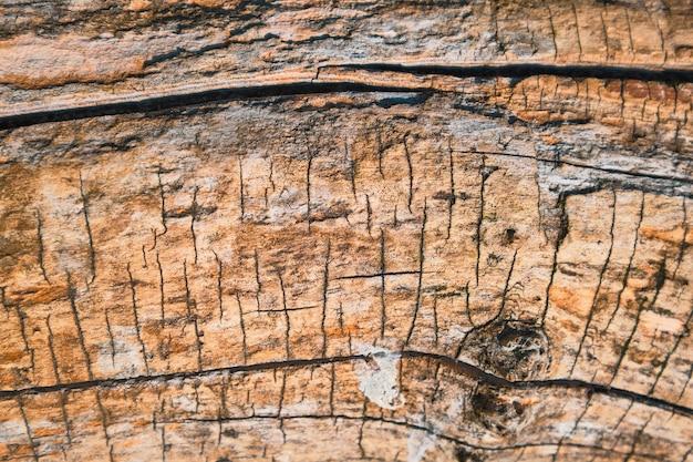 Estructura en relieve de un árbol viejo sin corteza. decoración de fondo