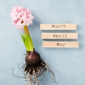 Etiquetas de los meses de primavera con raíz de jacinto