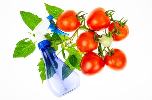 Ð¡a excepción de la pulverización de tomates con plaguicidas contra plagas y enfermedades. foto de estudio.