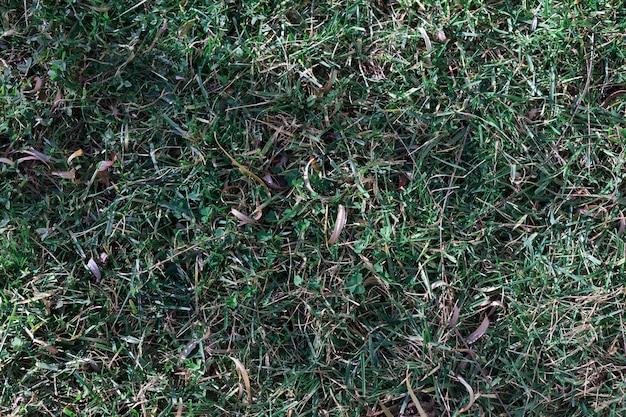 Excremento verde en el suelo