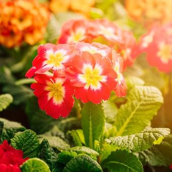 Exóticas flores rojas y amarillas frescas en la luz del sol