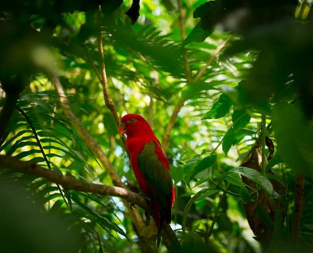 Exótico loro en la selva