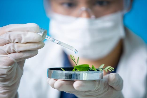 Experimento especialista en bioquímica en botánica orgánica natural