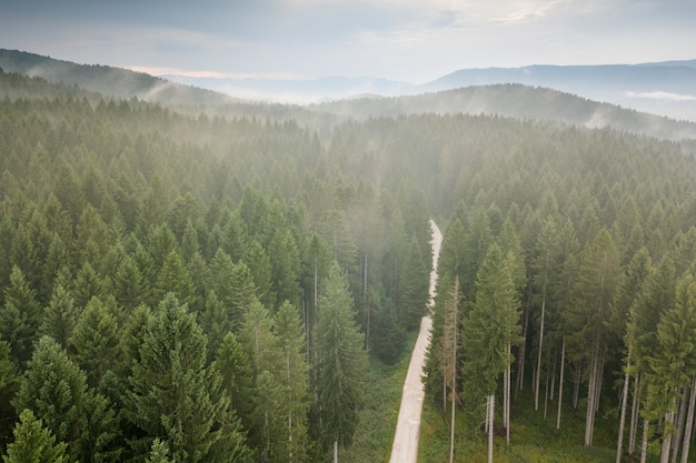 Explorando el bosque