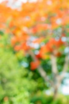 Extracto borroso de las flores del árbol, rojas y anaranjadas.