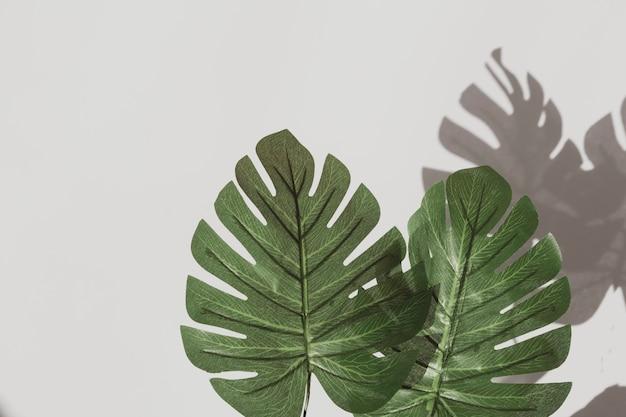 El extracto de la palma deja sombras en la pared blanca. la botánica copyspace.