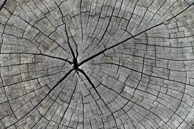 Extracto de la textura de madera del registro viejo, tocón de madera del registro como fondo o papel pintado
