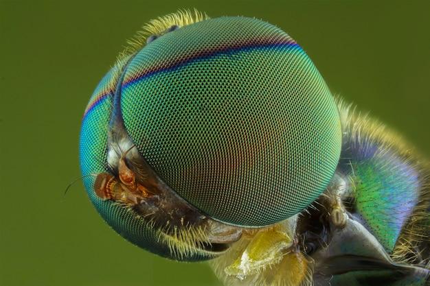 Extremo cerca de insecto