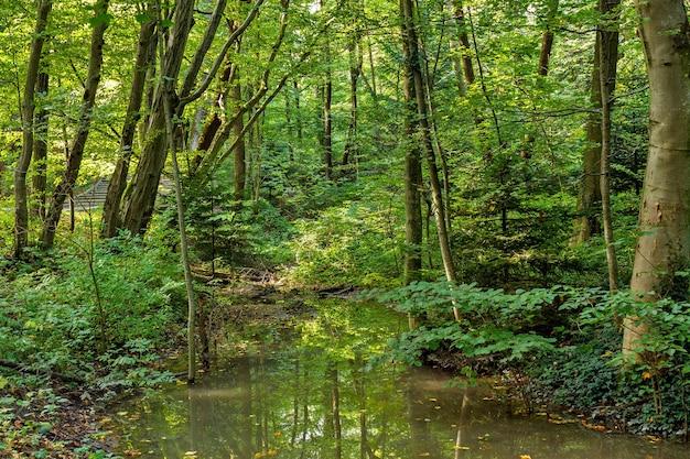 Exuberante pantano verde y escena de bosque tropical.