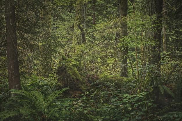 Exuberante selva tropical con plantas, árboles y arbustos.