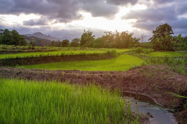 Los exuberantes campos verdes con la luz del sol ahora emitían una sensación de frescura.
