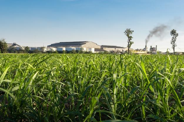 Fábrica del azúcar con el fondo de la naturaleza del campo de la caña de azúcar.