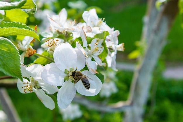 Fabulosa flor en los árboles en el jardín.
