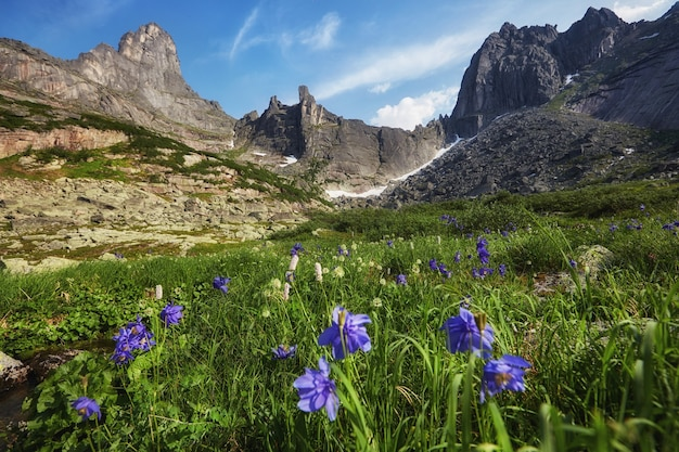 Fabulosos arroyos de montaña, exuberante vegetación y flores alrededor. agua de manantial descongelada de las montañas. vistas mágicas de altas montañas, prados alpinos