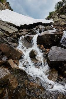 Fabulosos arroyos de montaña, exuberante vegetación y flores alrededor. agua de manantial descongelada de las montañas