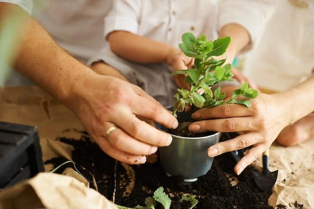 Familia feliz trabajando en casa. trasplantar plantas con su hijo