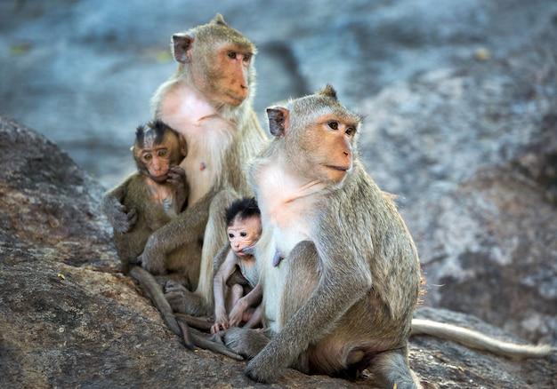 La familia de los monos en el ambiente natural.