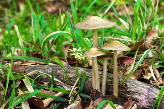 Familia de setas en el bosque.
