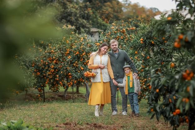 Familia de tres en un jardín con cosecha de árboles de mandarina