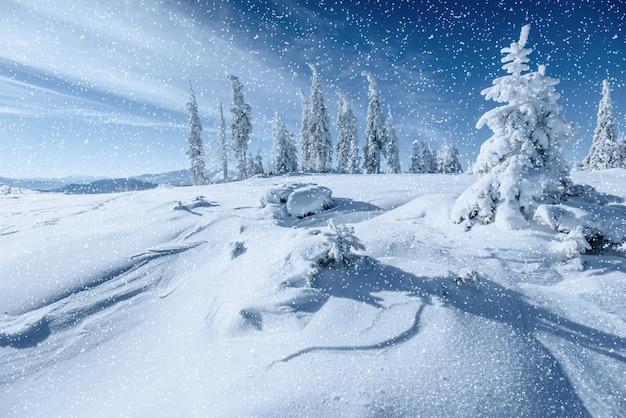 Fantástico paisaje invernal y árbol en escarcha. en anticipacion