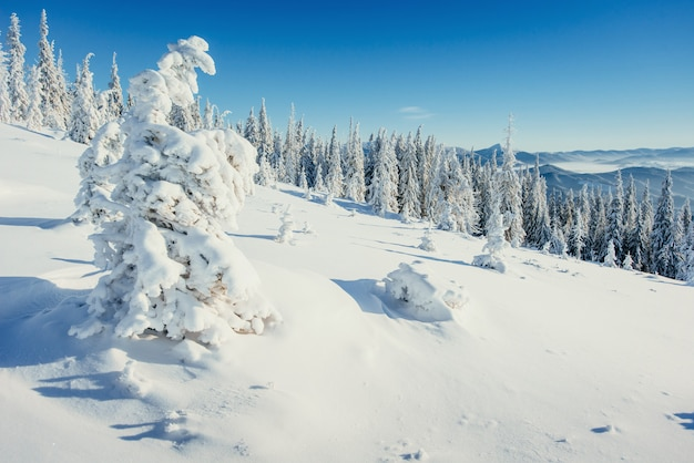 Fantástico paisaje de invierno. árboles de navidad cubiertos de nieve en las montañas alpinas