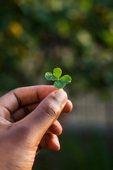 Fantástico primer plano de un trébol de cuatro hojas, sostenido en la mano por un chico. concepto de san patricio. significa buena suerte