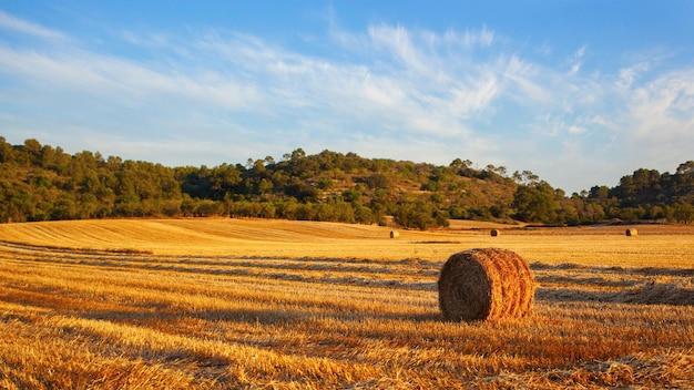 Fardos de paja redondos en campos cosechados y cielo azul