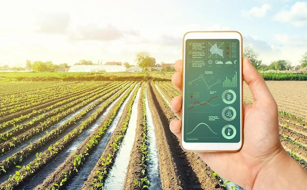 Farmer's sostiene un teléfono inteligente en una plantación agrícola. investigación científica