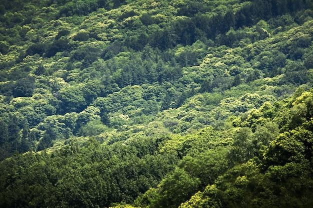 Fascinante paisaje del hermoso bosque denso brillante
