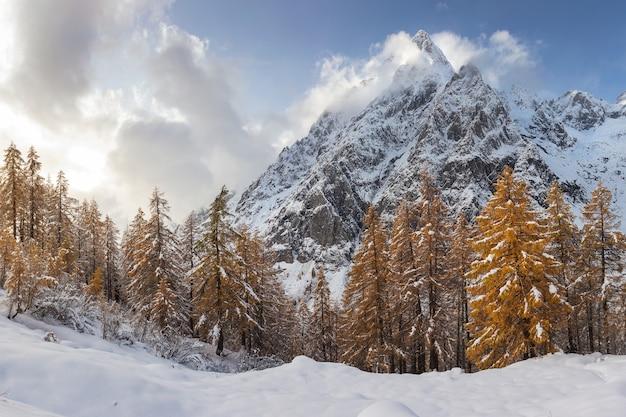 Fascinante vista de los árboles con las montañas cubiertas de nieve en el fondo