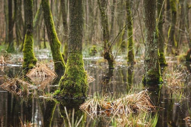 Fascinante vista de los árboles y plantas y el río en el bosque-concepto: misterioso