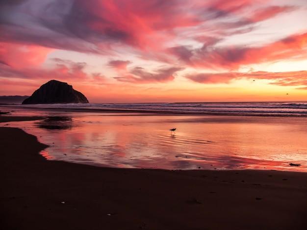 Fascinante vista del pájaro caminando cerca del océano en calma durante la puesta de sol