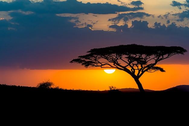 Fascinante vista de la silueta de un árbol en las llanuras de la sabana durante la puesta de sol