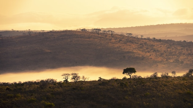 Fascinantes paisajes de selvas en sudáfrica