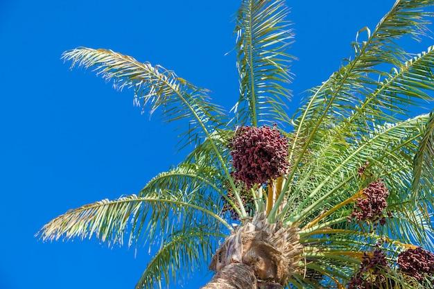Fecha palmeras contra el cielo