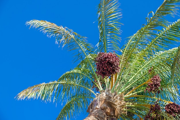 Fecha palmeras