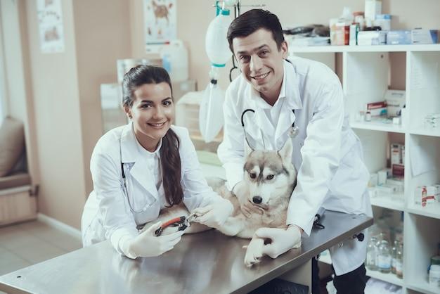 Felices veterinarios peluqueros recortar las uñas del perro.