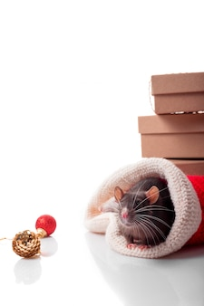 Feliz año chino de rata 2020 con rata gris oscuro con decoraciones de año nuevo
